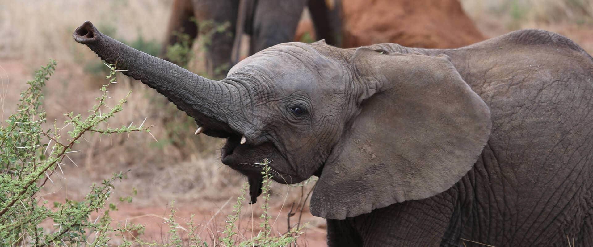 Familienreisen Südafrika Madikwe Victoria Falls