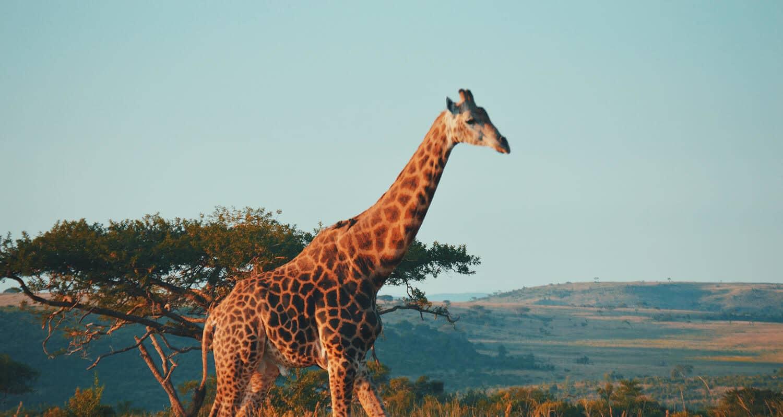 Südafrika Reise Online Reisebüro webook.ch