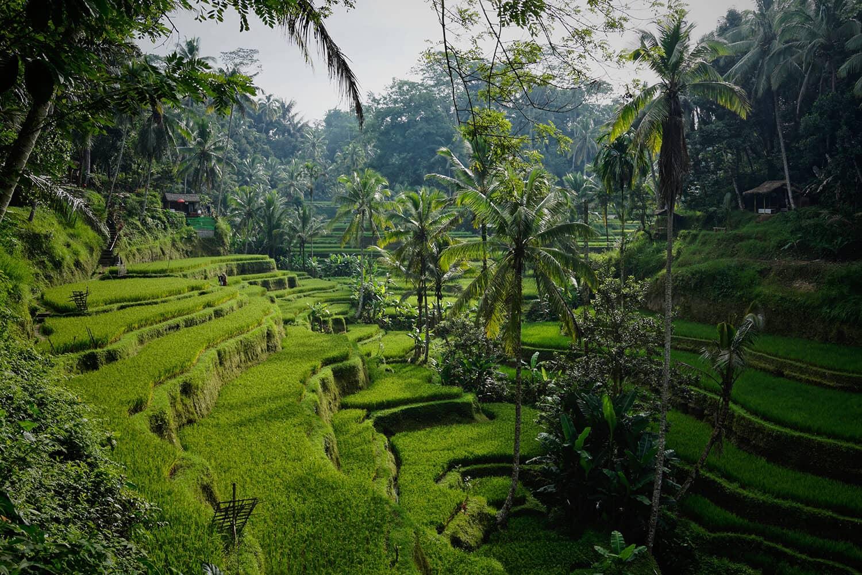 Bali Reise und Badeferien Online Reisebüro webook.ch