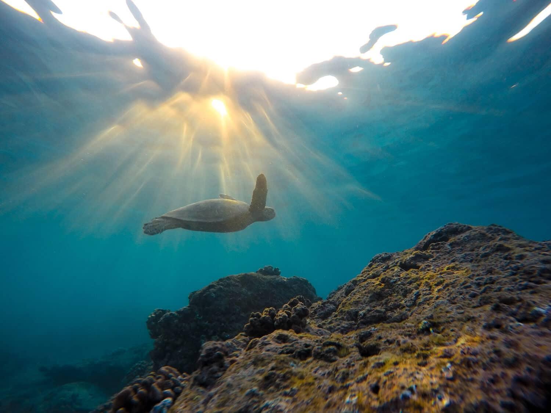 Australien für Taucher Reisebüro webook.ch